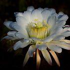 Echinopsis Candicans by Saija  Lehtonen