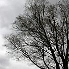 Winter Tree Silhouette - After the Storm #3 by Paula Tohline  Calhoun