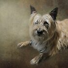 Teddy, the Cairn Terrier by Christina Brundage