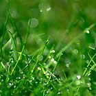 Wet Grass by Melissa Dickson