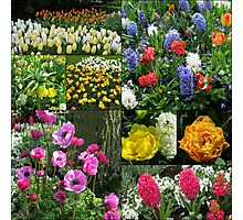 Keukenhof Collage featuring Anemones and Hyacinths Photographic Print