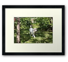 Happy Dance Great Pyrenees Style Framed Print