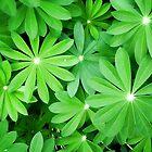 Lushly Green by Nikki Bond