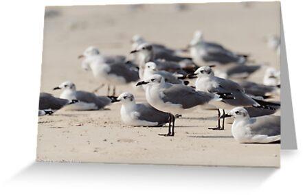 Crowded Beach by Barbara Shallue
