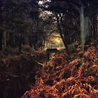 The secret forest by TLund