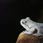 .Peron's Tree Frog by Donovan wilson