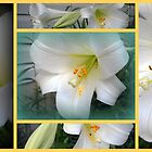 Collage of Lilies by Debbie Meyers