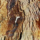 Butterfly wing texture abstract pattern by shelfpublisher