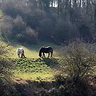 Horses Grazing at Sprotbrough by Tom Curtis