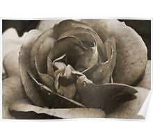 Antique Floral 2 Poster