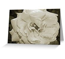 Antique Floral 5 Greeting Card