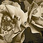 Antique Floral 6 by Debbie McGowan CAMMAYC Photography