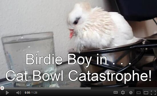 Birdie Boy in Cat Food Catastrophe! by Jaeda DeWalt