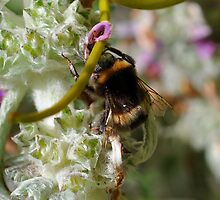 busy as a bee by bethbutt
