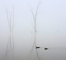 Morning swim - Lake Mulwala by Hans Kawitzki