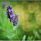 Lavender & bokeh by Jeananne  Martin