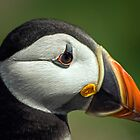 Puffin Eye by FranJ