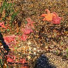 Tide Pools by Cynthia Broomfield