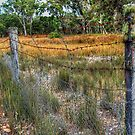 Dingo Proof Fence.  by Eve Parry