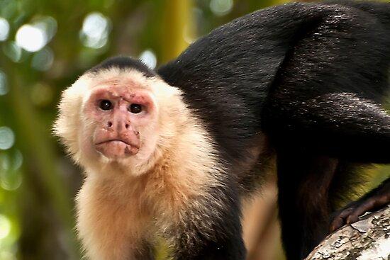 White Faced Monkey by Wanda Dumas