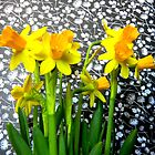 Daffodils with Black and White by CrystalFanning