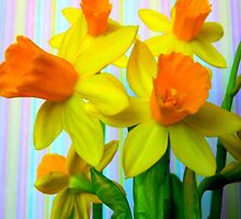 Daffodils and Stripes by CrystalFanning