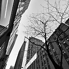 Twigs at Rockefeller - Manhattan, New York, USA by Sean Farrow