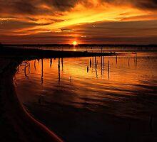 Shore Light by Carolyn  Fletcher