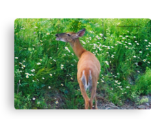 Flower Salad for Breakfast (White Tail Deer) Canvas Print