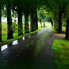 After the rain by Jeananne  Martin