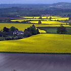 Across Fields of Gold by Clive