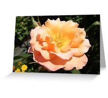 Flower Close-Up, West Street Garden, Lower Manhattan, New York City  Greeting Card