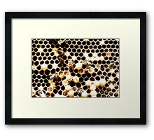 Honey Bees Under Threat Framed Print