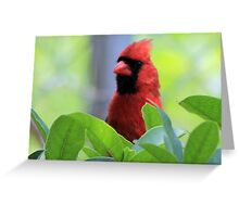 The Red Bird  Out Front # 8 Greeting Card