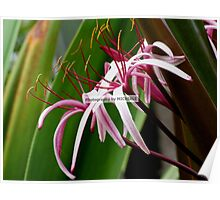 Feathery Flowers Poster
