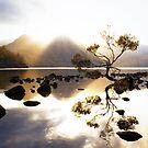 Tea Tree Sunset by Anthony Davey