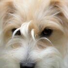 Puppy love by Martyn Franklin