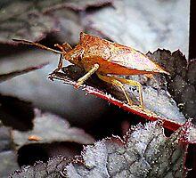 Shield Bug On Amethyst Myst Heuchera by Jean Gregory  Evans