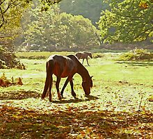 New forest ponies by Ian Merton