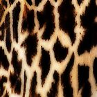 Giraffe Art by Delights