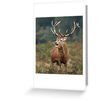 Bellowing Red Stag Greeting Card