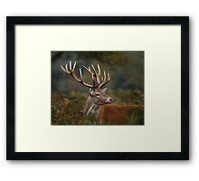Majestic Red Deer Framed Print