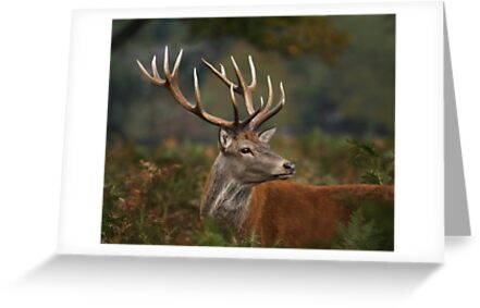 Majestic Red Deer by Patricia Jacobs CPAGB LRPS BPE2