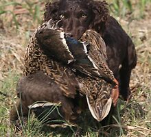 Boykin puppy with a duck by Pamela Kadlec