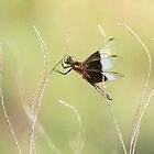 dragonfly in field by SusieG