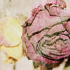 Fading Rose by Deborah Hall Barry