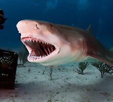 Shark! by Greg Amptman