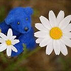 Blue Bear picks a Daisy by Kerry McQuaid