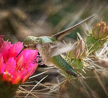 The Hummingbird and the Flower by Saija  Lehtonen