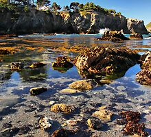 Low Tide in the Cove by Barbara  Brown